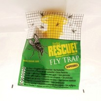 FLY TRAP ECOLOGICA